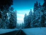 Road Trip Through Winter Wonderland