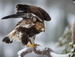 Eagle on a Branch