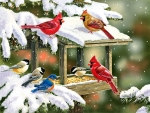 Winter Snacks - Birds FC