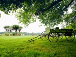 Carriage in the field