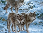 Wolfpack in Snow