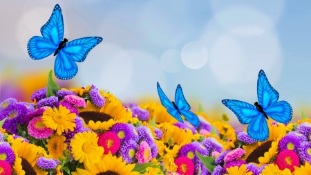 Flower and butterflies - colorful, lovely, floral, beautiful, flowers, pretty, summer, butterflies