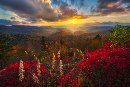 Sunset over Flowery Mountain Landscape - Flowers, Sunsets, Nature, Landscapes, Clouds, Mountains
