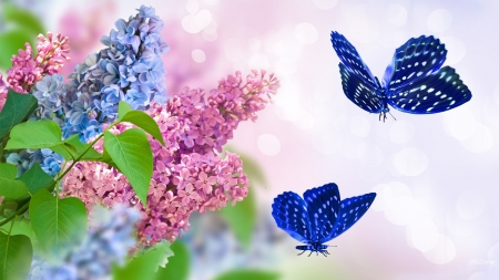 Spring Perfection - Firefox Persona theme, bright, butterfly, fragrant, lilacs, spring, nature