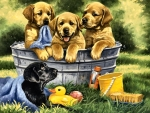 Squeaky Clean - Dogs F