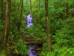 Enchanting Waterfall in Green Forest