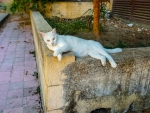 Stray Cat in Rhodes, Greece