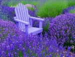 Chair on Lavender Field