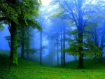 Soft Misty Green Forest