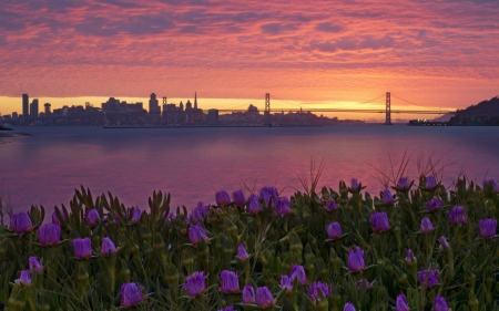 San Francisco - San Francisco, sunrise, bridge, flowers