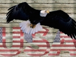 Freedom Eagle USA