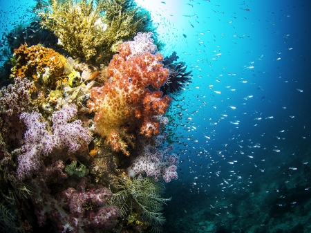 Colorful Coral & Sealife - Nature, Coral Reefs, Colorful, Fish, Oceans, Underwater, Sealife