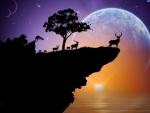deer herd on a cliff
