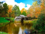 Mill on the River and Colorful Autumn Forest