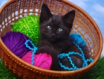 Black kitty in basket