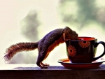 Squirrels and Coffee