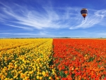 Balloon flies over tulip field