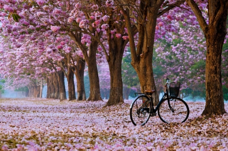 Blossoming trees - pink, blossoms, wallpaper, trees, nature, pretty, Spring