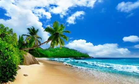 Sea and palms - paradise, palms, breeze, summer, waves, rest, tropics, wind, sea, sands, island, beautiful, beach, sky
