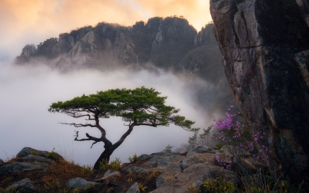 Morning in Mountains - colors, rocks, tree, sky, mist