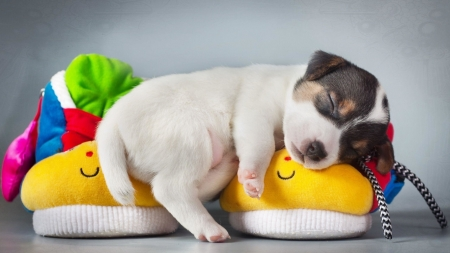 Nite Nite - Sleeping, Puppy, Slippers, Good Night