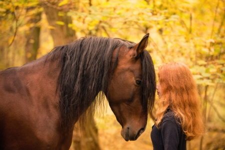 :-) - horse, autumn, cowgirl, animal, redhead, yellow, cal, girl