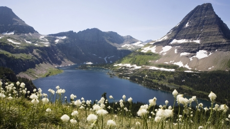 Mountains and lake, British Columbia, Canada - White flowers, Mountains, British Columbia, Lake, Canada
