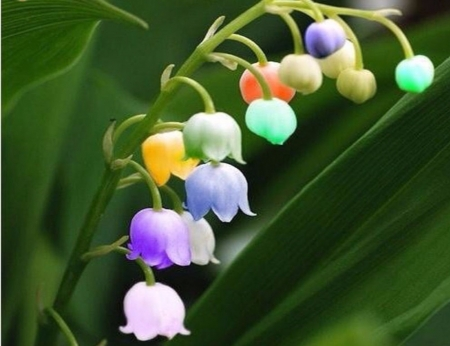 Pastel Lily Of The Valley - Orange, Purple, Flower, Lily, Green, Nature, White, Blue