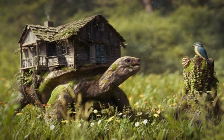 giant turtle house - grass, giant, turtle, bird, flower, house