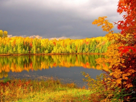 Autumn Lake Forest - leaves, forest, nature, trees, lake, autumn, flowers, splendor, reflection