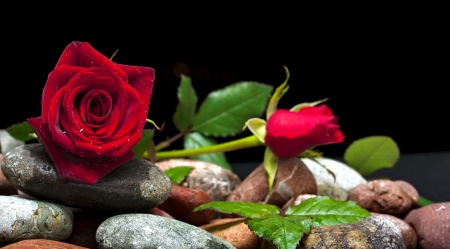 Roses and stones - petals, fragrance, stones, leaves, red, lovely, scent, roses, flowers, beautiful, pretty