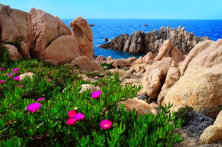 Sardinia - beautiful, Sardinia, Italy, wildflowers, rocks, coast, sea, paradise, beach, mediterranean