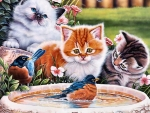 Splashing Up Some Fun - Cats F