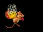 Fairy-mouse