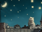 Cat looking at stars