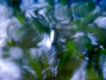 Abstract Water And Leaves