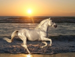 A White Horse on the Beach