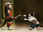 Kung Fu Kitties