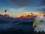 Sunrise Eagle Morning