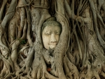 Buddah in the roots