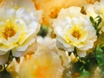 Yellow roses art