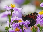 A butterfly on flower