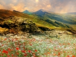 Valley of Poppies