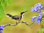 Bird on Branch With Lilac Flowers FC