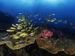 Enchanting Corals and Fish in the Sea