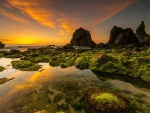 Mossy Seascape at Sunset