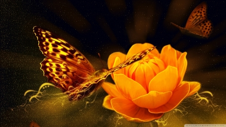 Magic Butterfly - wings, butterfly, insects, flowers, animal