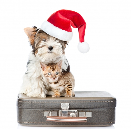 Merry Christmas! - couple, hat, cute, santa, caine, christmas, animal, dog, kitten, cat, pisica, craciun, red