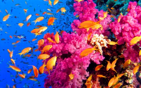 Colorful Coralreef - Coral Reefs, Nature, Colorful, Sea, Oceans, Ecosystems