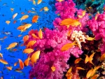 Colorful Coralreef